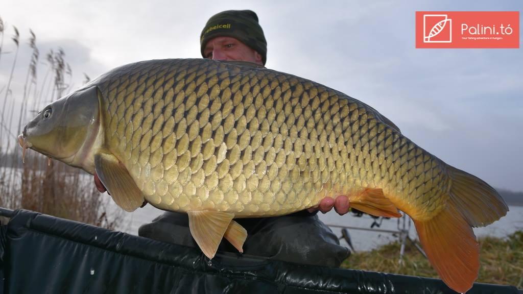 halak a vízből társkereső weboldalon Chris egan társkereső amanda seyfried